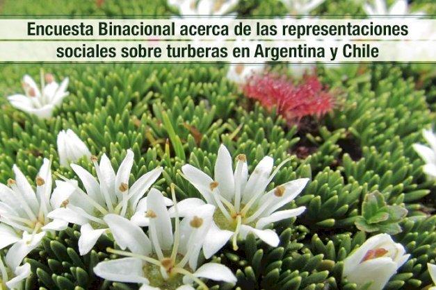 Flor de Turberas fueguinas